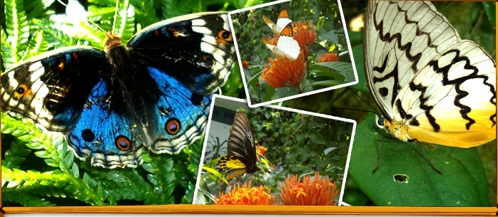 Kuala Lumpur Butterfly Park Malaysia The Largest